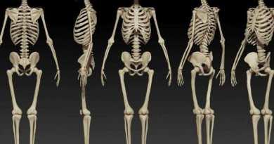 FP QZ human body skeleton