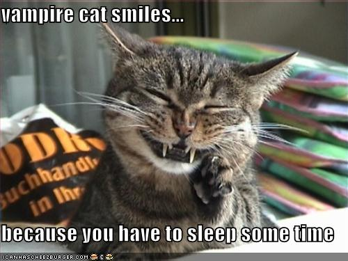 funny-pictures-happy-vampire-cat