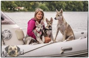 Wolfhunde zu besitzen ist eine Lebensaufgabe – Meine Bootshunde Aracho, Asteri (Aria) und Mama Delphi :)