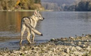 Aracho, 5 Monate hat Spaß an der Donau