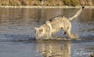 Aracho hat das Wasser entdeckt