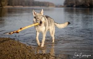 Aracho fängt an aus dem Wasser zu apportieren :)