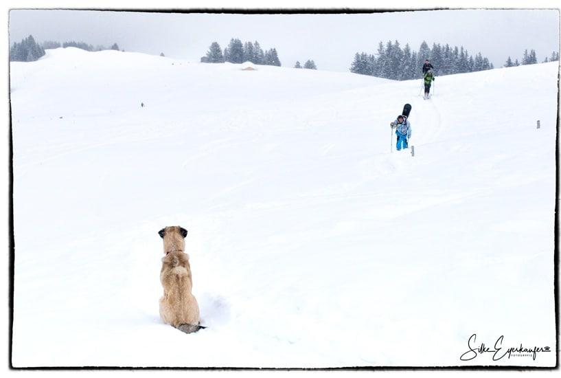 Memory: Skitour mit Apollo ♥
