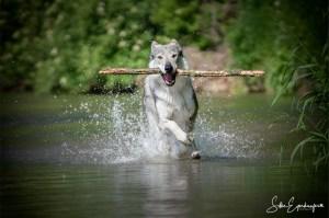 Das Beste was man mit Hunden bei diesem Wetter machen kann :)