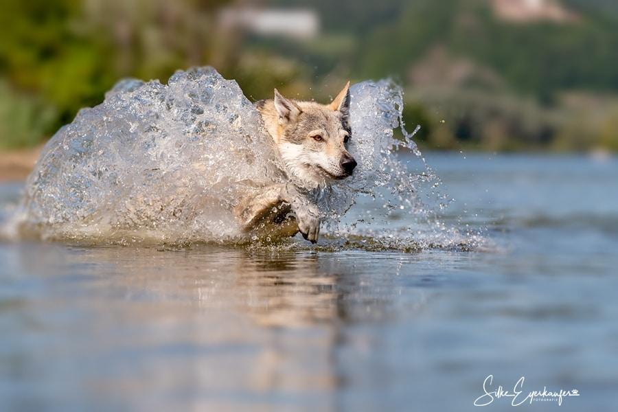 Delphi verschmilzt mit dem Wasser während sie einen Stöckchen aus der Donau holt :)