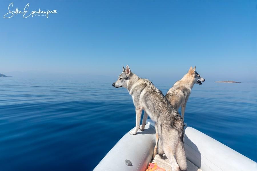 Video: Reisen mit Hunden – Delfintour im Korinthischen Meer 2019 – Nach 3 1/2 Stunden ist der Kleine fertig mit der Welt.