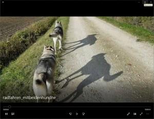 Video: Die erste Fahrt mit dem Fahrrad auf der ich alleine mit beiden Hunden unterwegs bin :)