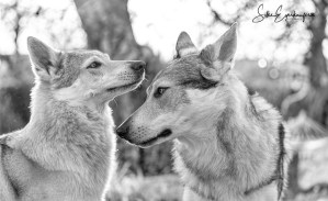 Hundetraining während Corona