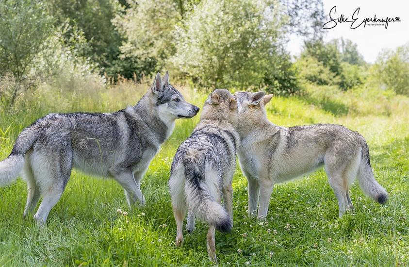 Familie – Delphi, Kismet und Aracho :)