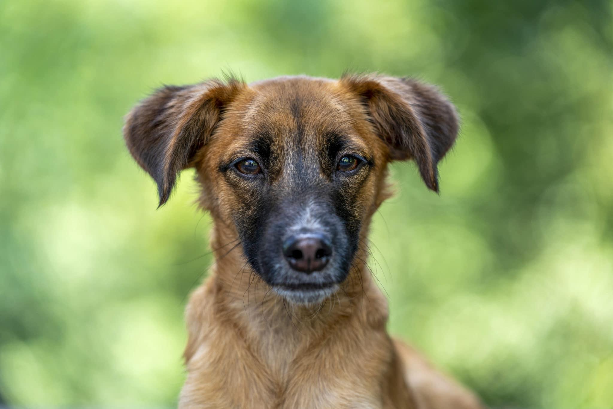 Freddie – Straßenhunde Welpe aus Kroatien