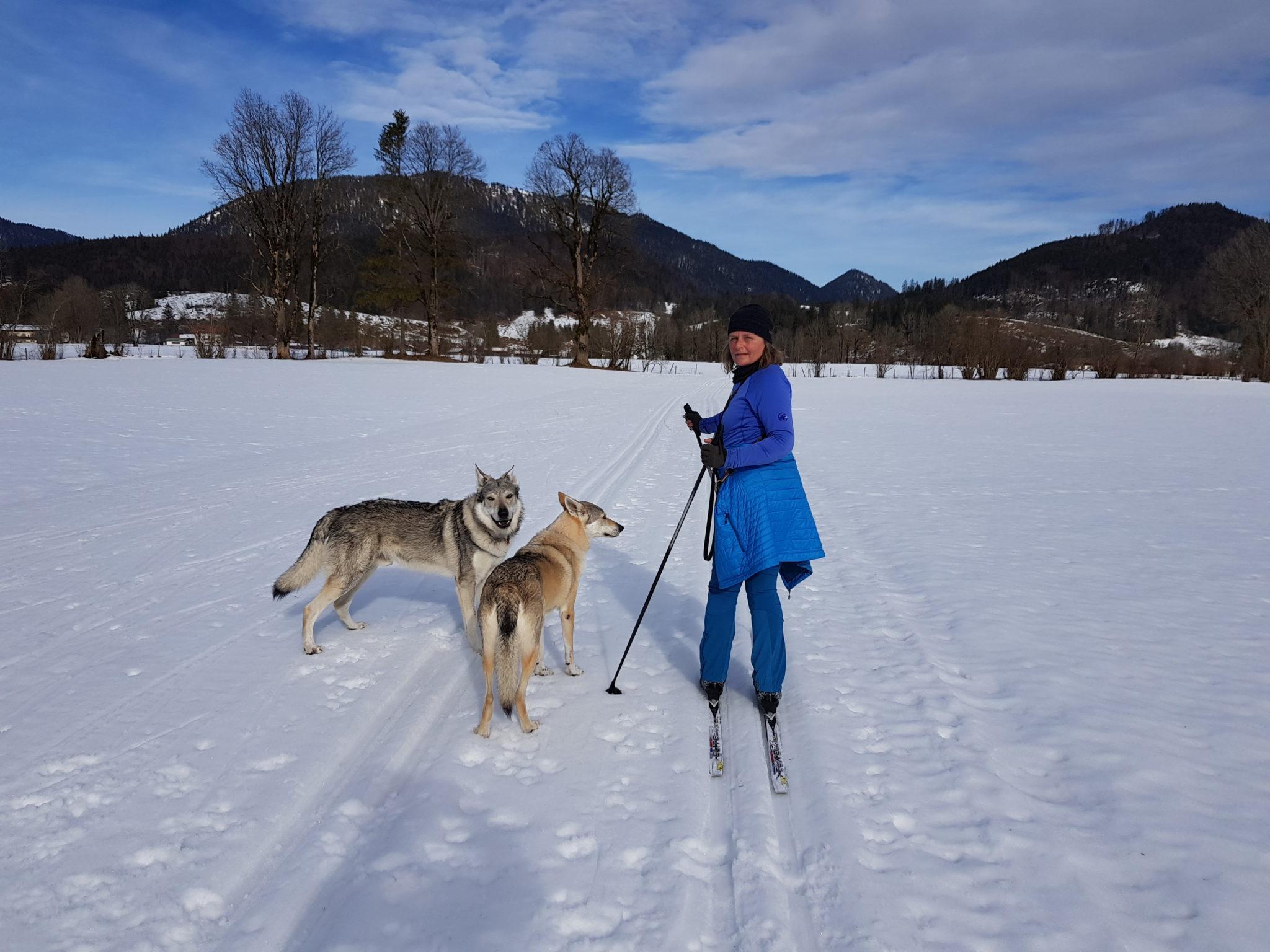 Ski – Langlauf – natürlich mit Hunden, in der Jachenau