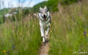Hunde in Bewegung – Aracho hat Spaß. Bewegte Tierfotografie und Portraits :)