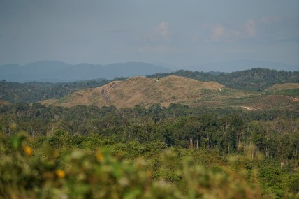 land and forests have been sold - taken away from the indigenous people