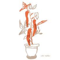 Gewürzpflanzen | Aphrodisiakum | ©Silke Müller