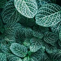 Kunstpflanzen als Alternative zu echten Pflanzen