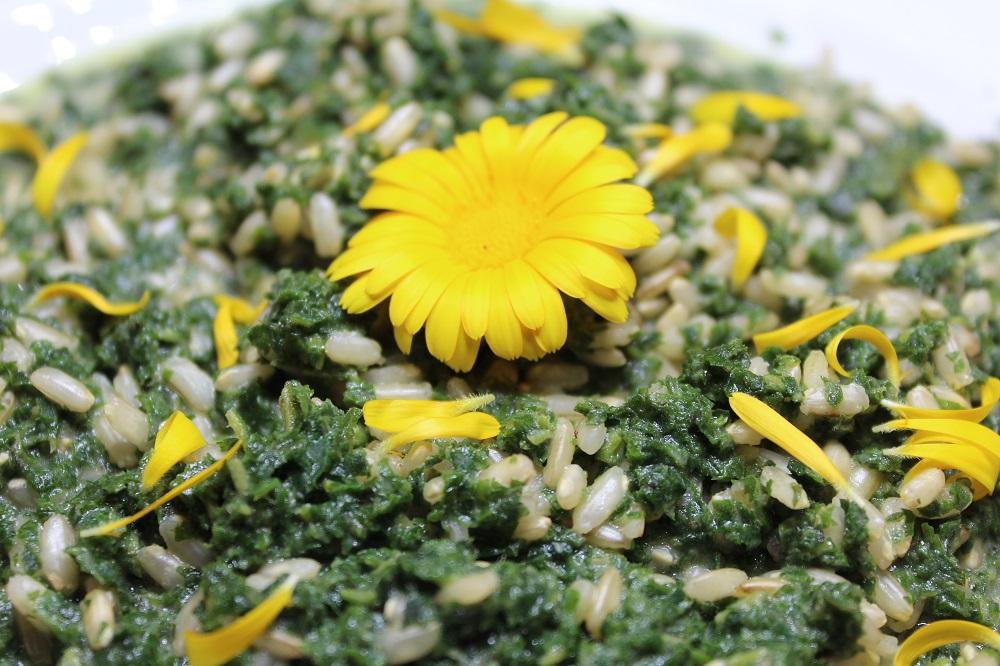 risotto alle ortiche stracchino e fiori di calendula