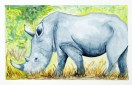 Le rhinocéros pas si féroce que ça!