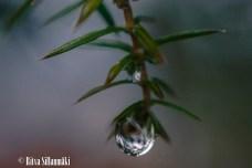 Ritva Sillanmäki_droplets (21 of 80)