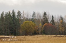 Country side autumn 2015 (39 of 179)