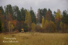 Country side autumn 2015 (43 of 179)