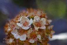 Summer flowers (16)