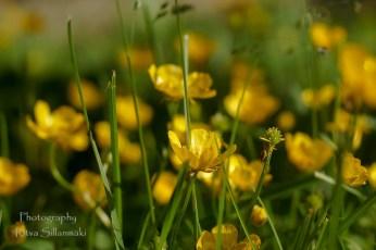 Summer flowers (50)