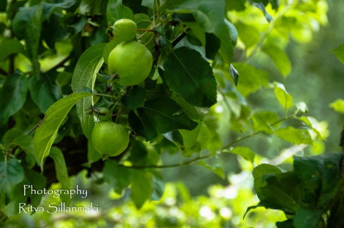 Apple (4)