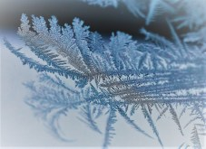frost-detail