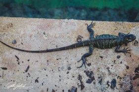 green-lizard-4