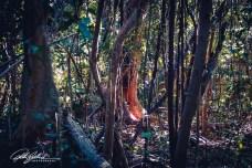 miami-hammock-5