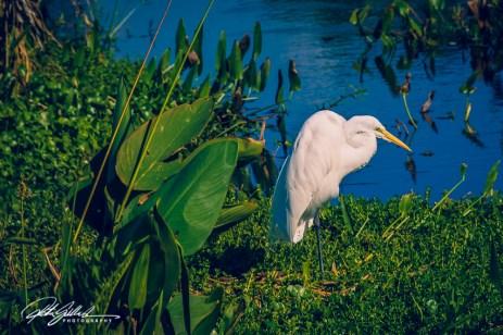 Wakodahatchee Wetland (44 of 154)