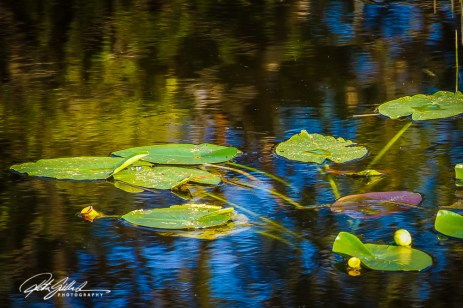 Wakodahatchee Wetland (82 of 154)