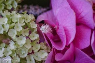 flower bouquet-14