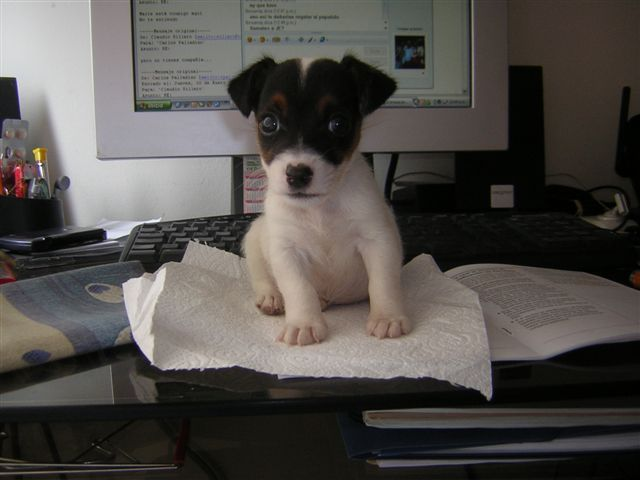 Jack. Mi compañero de blog