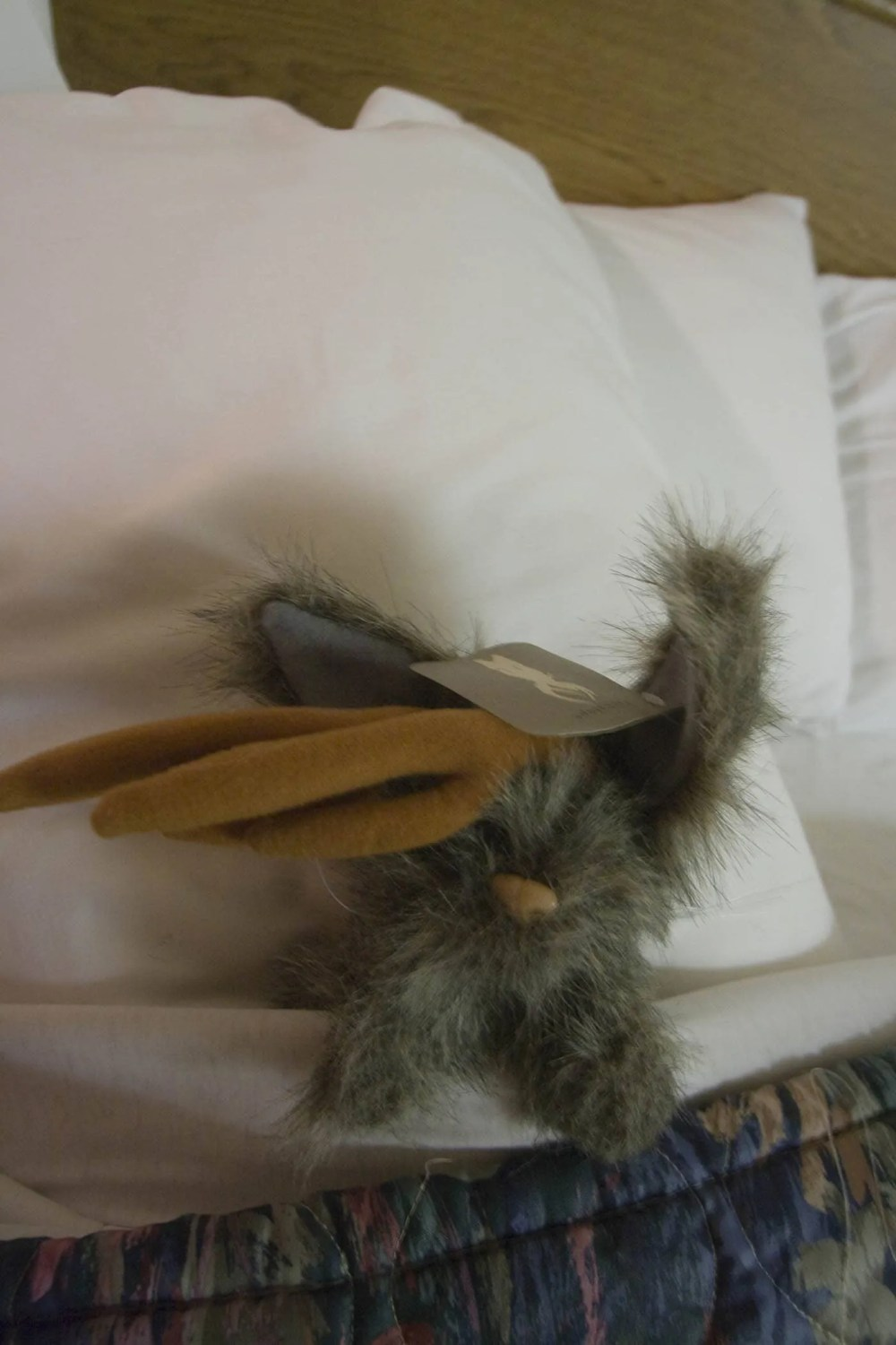 Flopsy the Jackalope - Silly America's jackalope mascot - tucked into a hotel bed after a long day of road tripping.