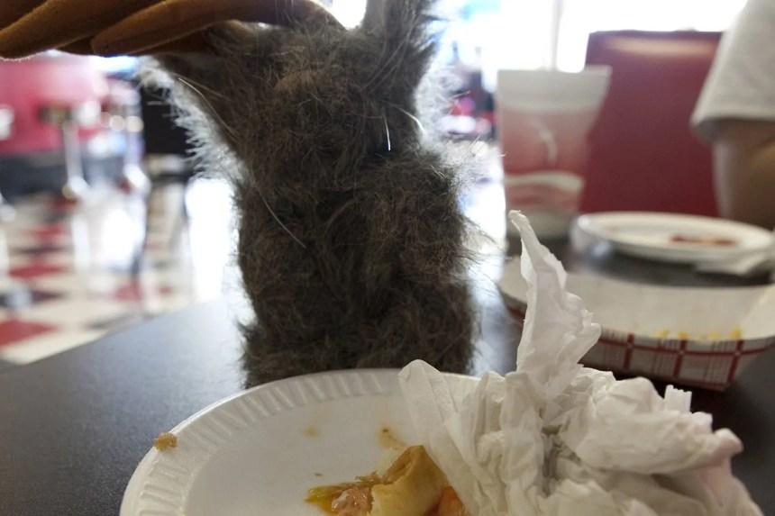 Flopsy the Jackalope ate his entire Guberburger at The Wheel Inn in Sedalia, Missouri.