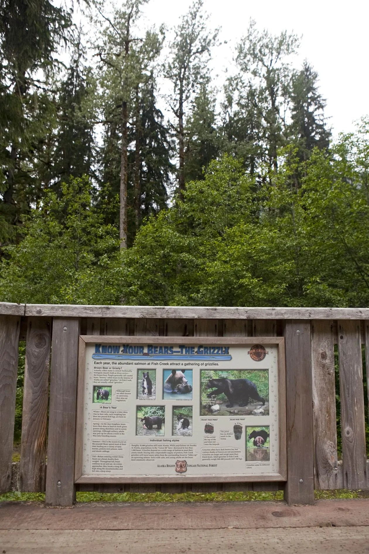 Know Your Bears - the Grizzly - at Fish Creek Wildlife Observation Site at the Tongass National Forest in Hyder, Alaska.