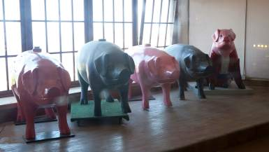 Pigs on Parade - Row of giant pigs inside Pike Place Market in Seattle, Washington.