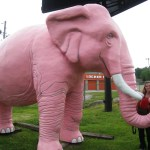Large Pink Elephant in Fenton, Missouri