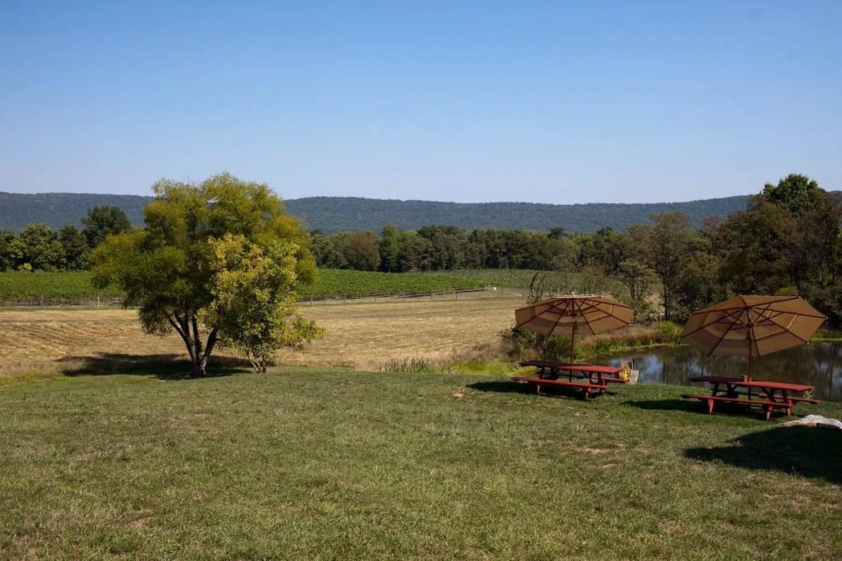 Notaviva vineyards in Virginia