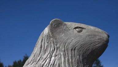 Big Marmot Statue in 100 Mile House, British Columbia, Canada