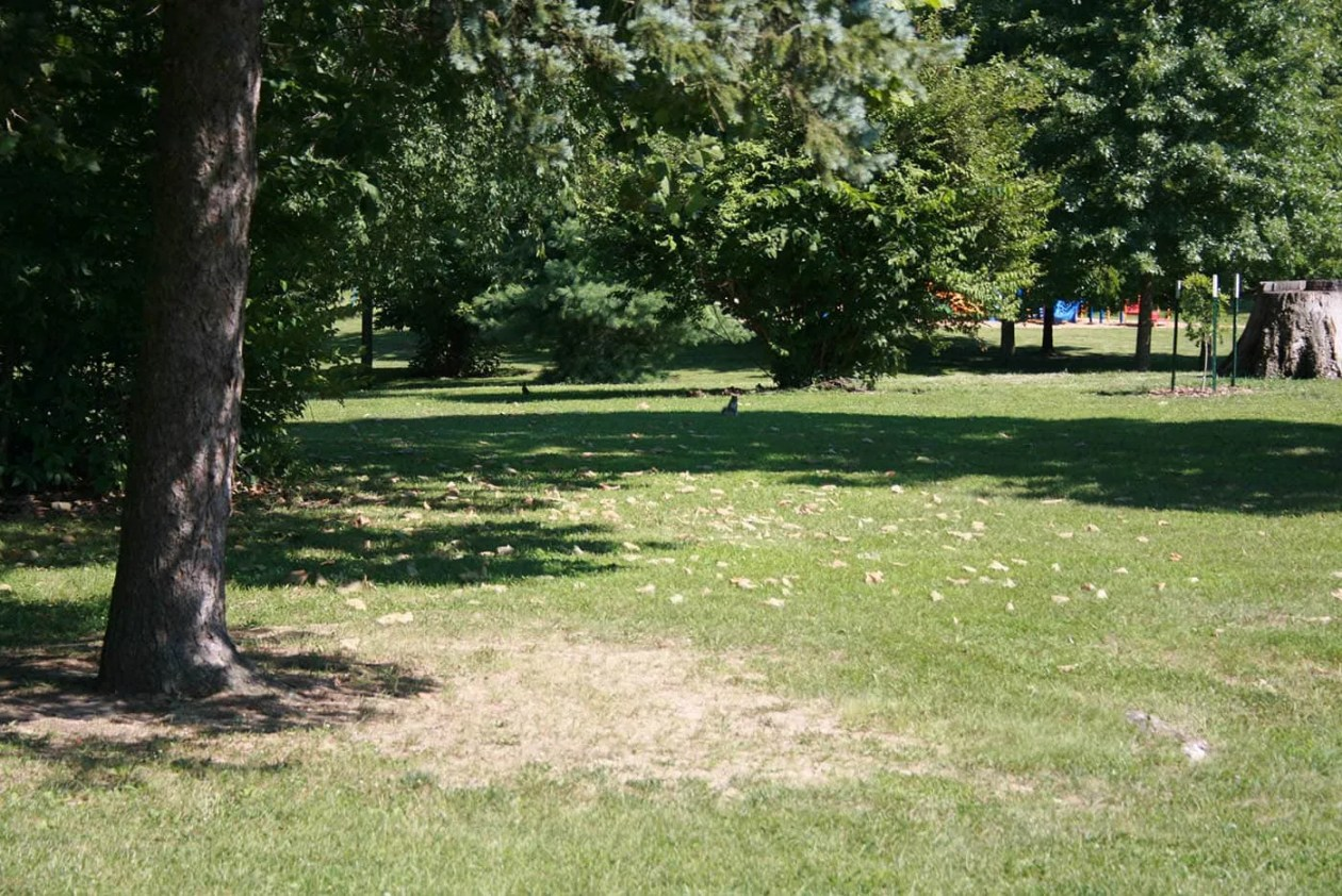 Squirrels in Olney, Illinois: Home of the White Squirrels