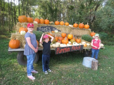 pumpkin-patch-2016-013