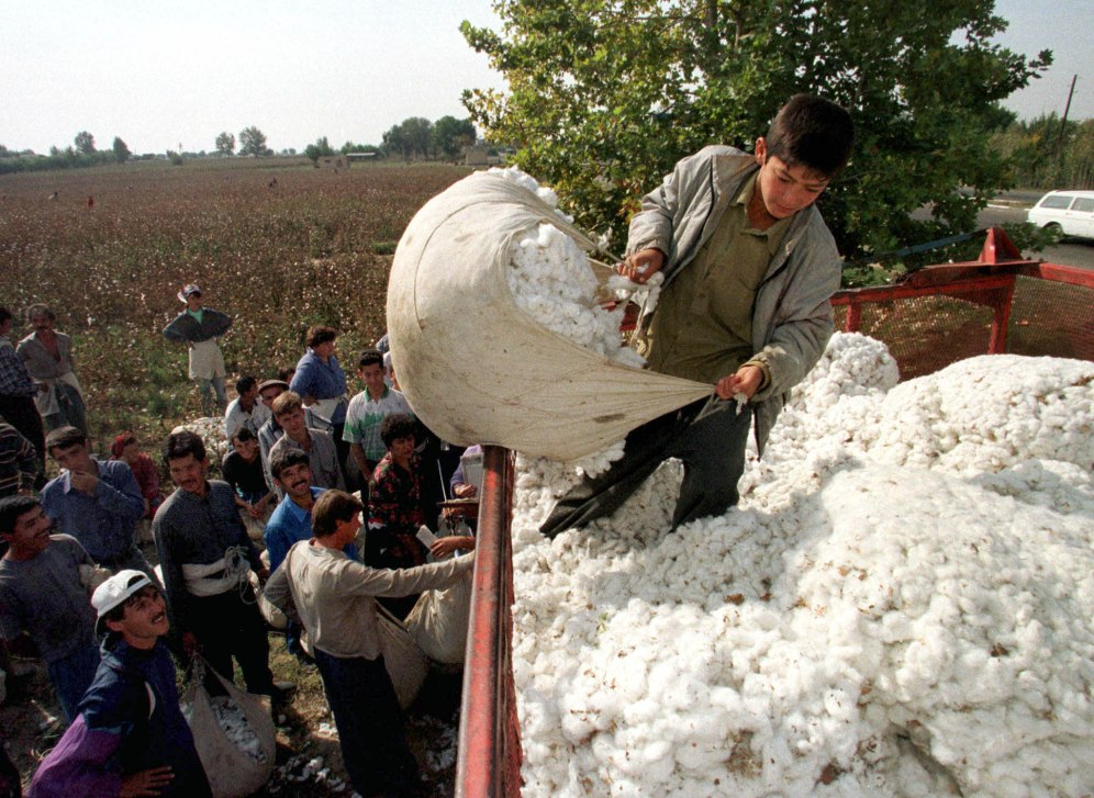 Uzbek boy dumps harvested cotton onto a truck in Tashkent Oblast