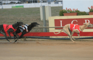 Greyhound Racing Australia Prize Money: How much will they win for Greyhound Racing Prize Money