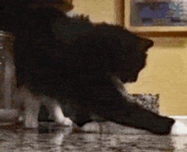 Cat anticipating