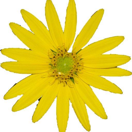Silphium Flower logo