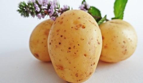 gegratineerde aardappelschotel