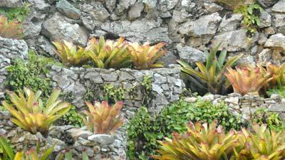 El jardín cuenta con 6 000 especies de otras plantas ornamentales, árboles y flores que representan la flora nacional de varios países, el 11 de Octubre de 2010, Pinar del Río, Cuba. Foto: Calixto N. Llanes/Juventud Rebelde (CUBA)