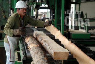 """Un obrero recoge la madera cortada en el Aserrío """"Combate Las Tenerías"""", el 14 de Enero de 2011, Pinar del Río, Cuba. Foto: Calixto N. Llanes/Juventud Rebelde (CUBA)"""